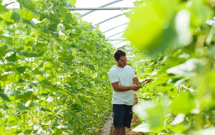la-agricultura-ecologica-genero-452-millones-de-euros-el-año-pasado-en-la-comunidad-valenciana-segun-datos-del-comite-de-agricultura-ecologica-de-la-comunitat-valenciana-caecv