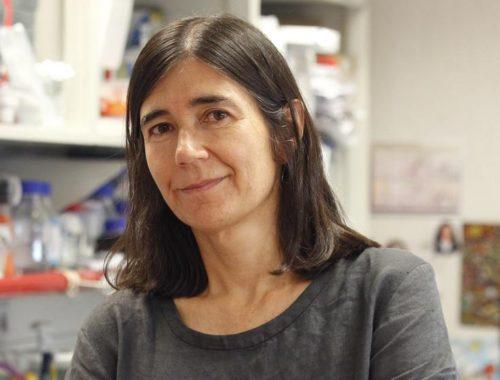 maria-blasco-directora-del-centro-nacional-de-investigaciones-oncologicas-comunidad-valenciana