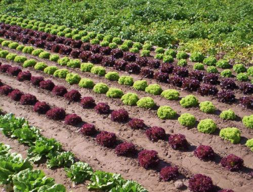 la-produccion-ecologica-sigue-creciendo-en-la-comunitat-valenciana