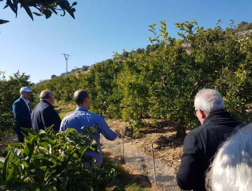 la-agricultura-smart-revoluciona-los-citricos