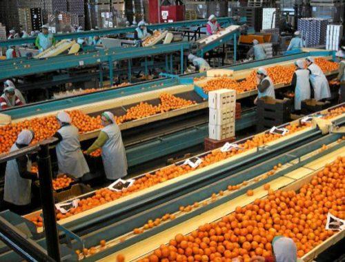 la-naranja-y-el-azulejo-exportaciones